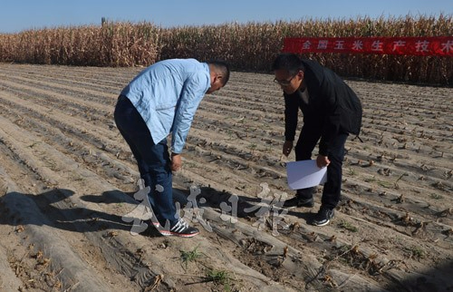 农技人员在凉州区武南镇玉米全膜双垄沟灌示范点交..