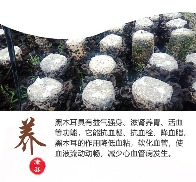 康县木耳1127-3_14