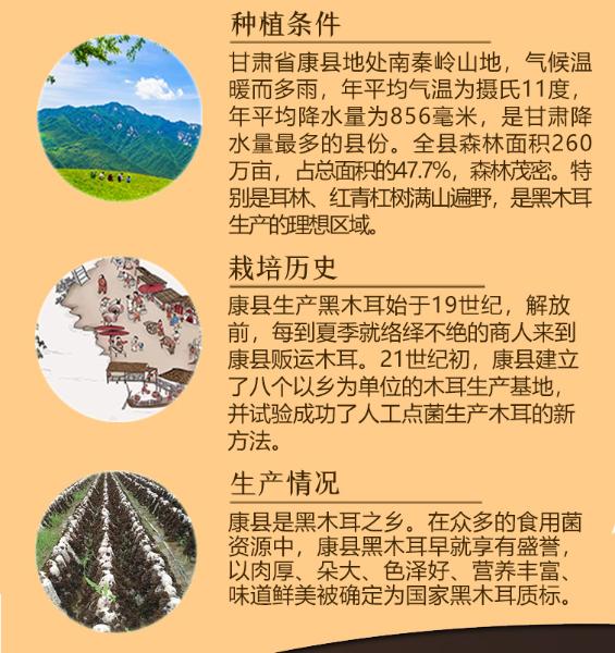 康县木耳1127-3_03